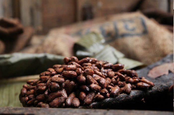 cacao prieto criollo dominican republic