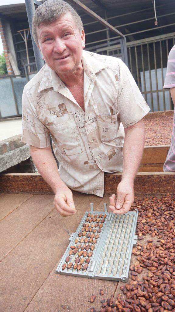 chocolate tree colombia huila 16002
