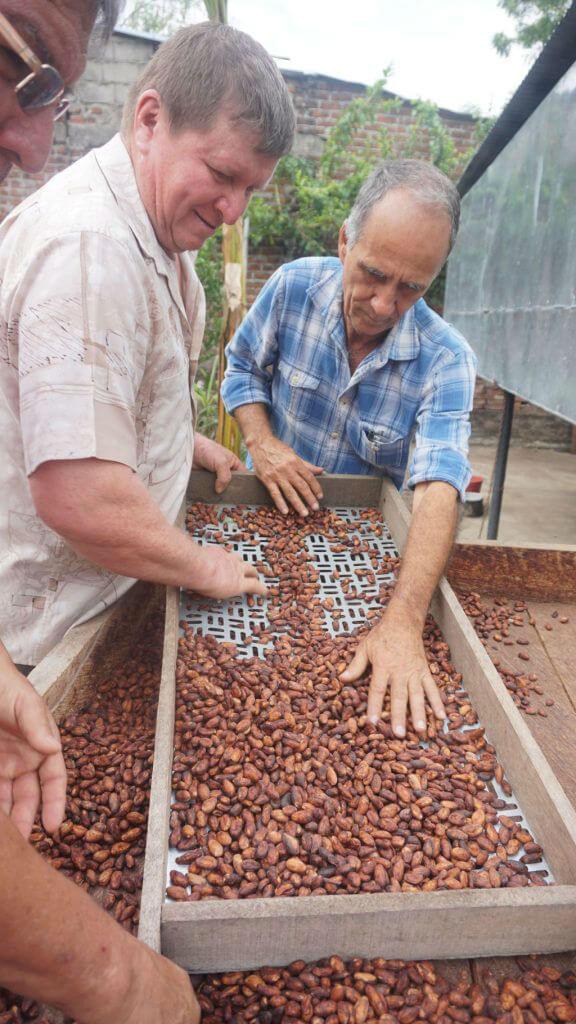 chocolate tree colombia huila 16003