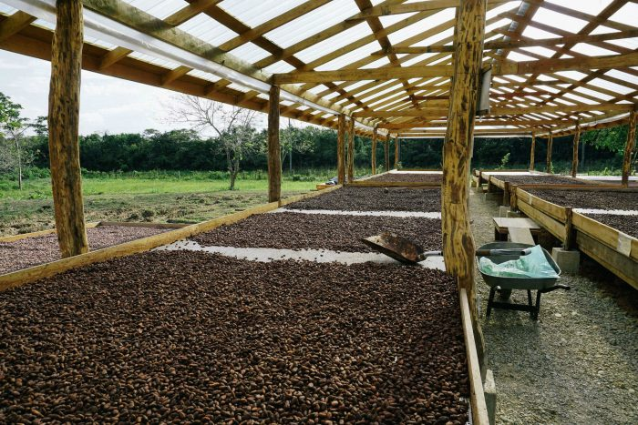 dick taylor belize toledo 72 maya mountain cacao drying cocoa